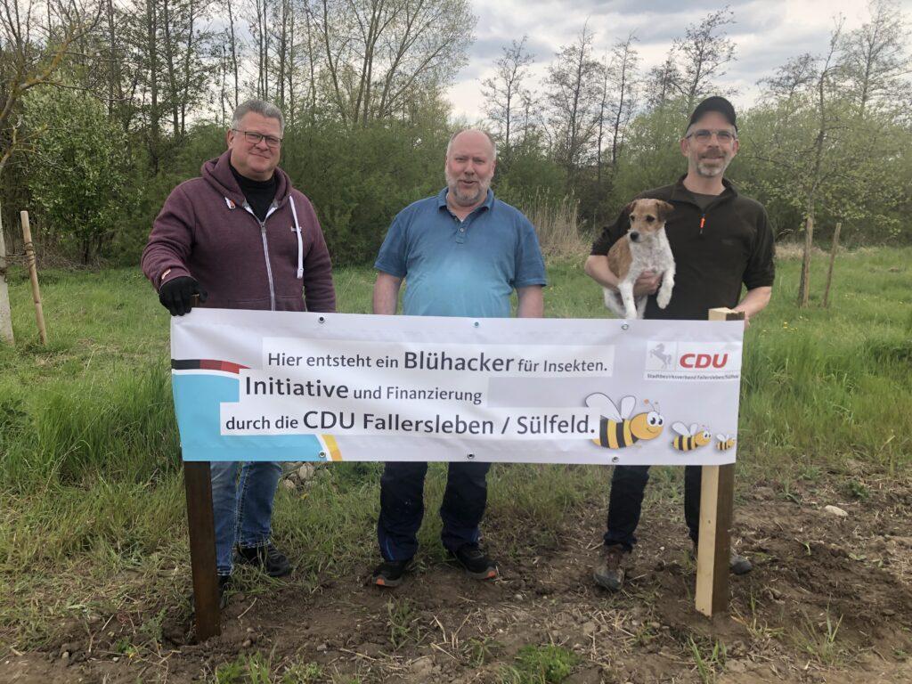Blühacker wächst zwischen Fallersleben und Sülfeld